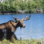 ©Steve Deschênes, parc national de la Gaspésie - Sépaq