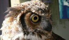Centre d'interprétation des battures et de la réhabilitation des oiseaux – CIBRO