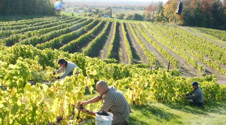 Route des vins Brome-Missisquoi ©Clovis Durand