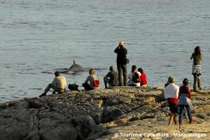 2008-activite-baleinescapdebondsir-marcloiselle-60